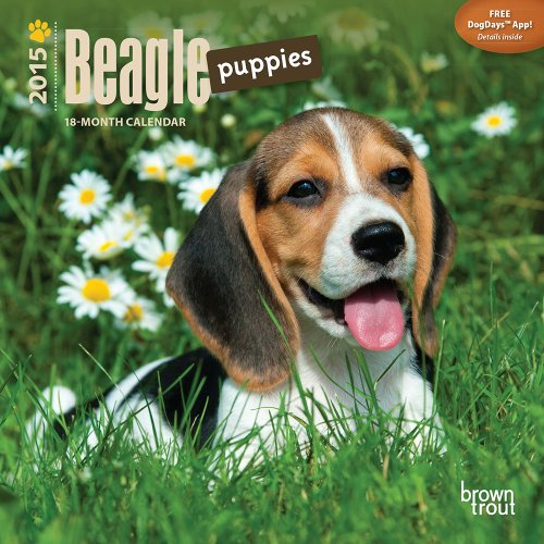9781465023667: Beagle Puppies 2015 Mini 7x7