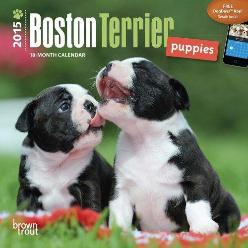 9781465023704: Boston Terrier Puppies 2015 Mini 7x7