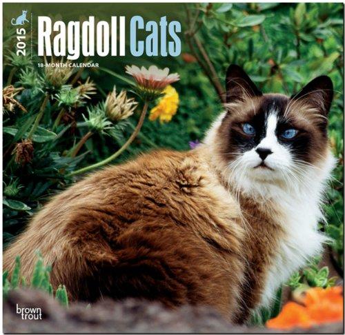 9781465025807: Ragdoll Cats 2015 Square 12x12