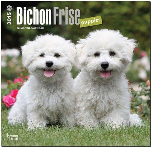 9781465026040: Bichon Frise Puppies 2015 Square 12x12