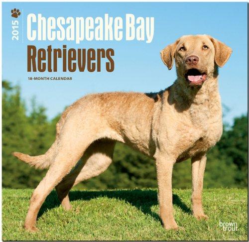 9781465026248: Chesapeake Bay Retrievers 2015 Wall