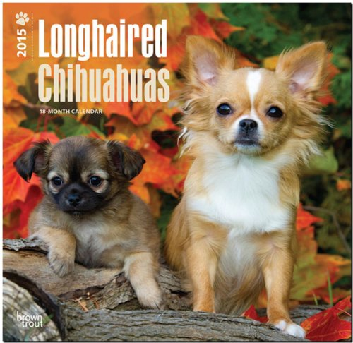 9781465026262: Chihuahuas, Longhaired 2015 Square 12x12 (Multilingual Edition)