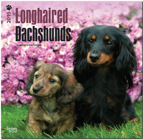 9781465026330: Dachshunds, Longhaired 2015 Square 12x12 (Multilingual Edition)
