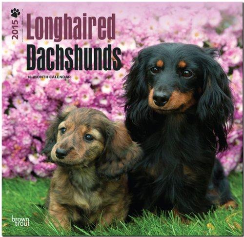 9781465026330: Longhaired Dachshunds 18-Month 2015 Calendar