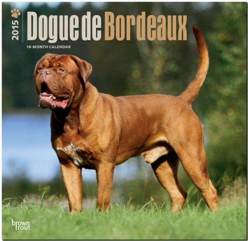 Dogue de Bordeaux 2015 Square 12x12 (Multilingual Edition): BrownTrout