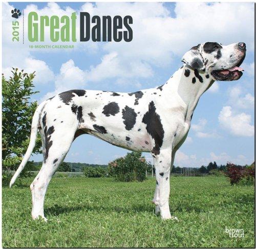 9781465026521: Great Danes (International) 2015 Wall Calendar