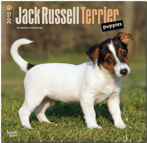 9781465026613: Jack Russell Terrier Puppies 2015 Square 12x12 (Multilingual Edition)