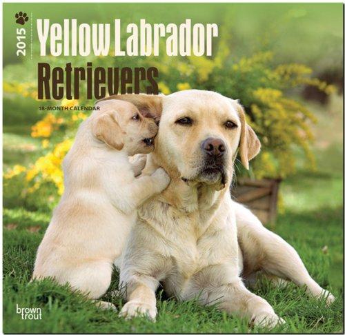 9781465026699: Labrador Retrievers, Yellow 2015 Square 12x12 (Multilingual Edition)