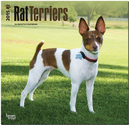 9781465026910: Rat Terriers 2015 Square 12x12 (Multilingual Edition)