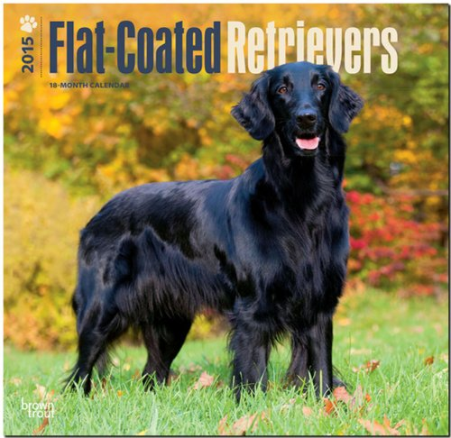 9781465026927: Flat-Coated Retrievers 2015 Wall