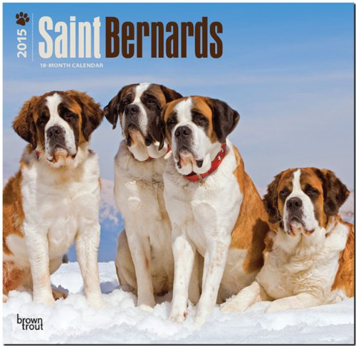 9781465026965: Saint Bernards 2015 Wall