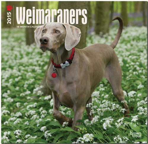 9781465027177: Weimaraners (Intl) 2015 Square 12x12 (Multilingual Edition)