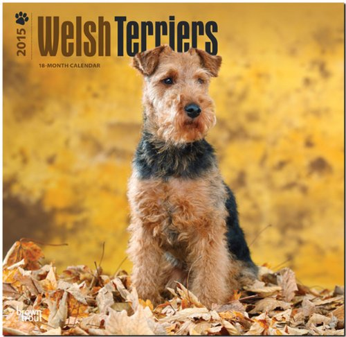 9781465027191: Welsh Terriers 2015 Square 12x12 (Multilingual Edition)