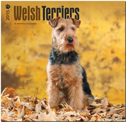 9781465027191: Welsh Terriers 2015 18 Month Calendar