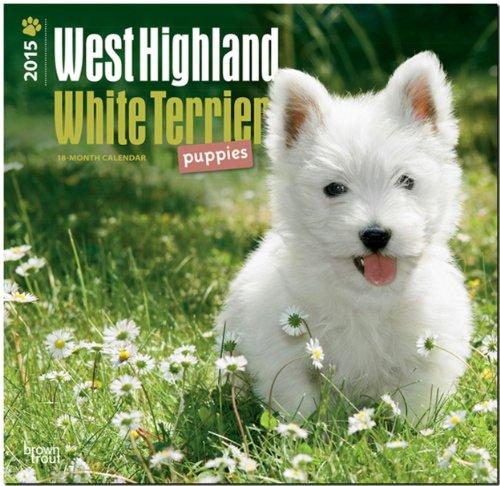 9781465027214: West Highland White Terrier Puppies 2015 Calendar