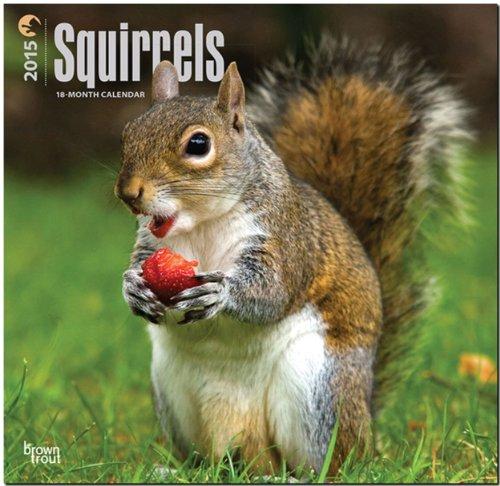 9781465028792: Squirrels 18-Month 2015 Calendar