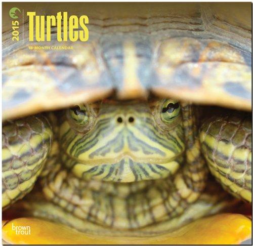 9781465028839: Turtles 2015 - Schildkröten: Original BrownTrout-Kalender