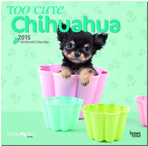 9781465029218: Too Cute Chihuahua 18-Month 2015 Calendar