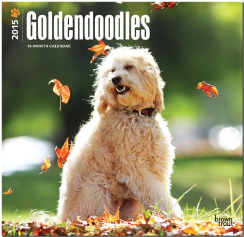 9781465034212: Goldendoodles 2015 Square 12x12