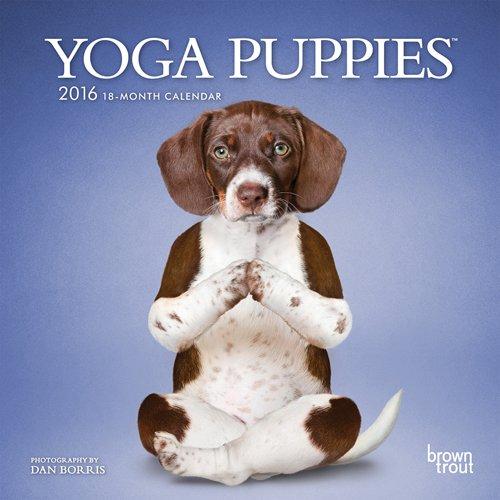 9781465039460: Yoga Puppies 2016 Mini Wall
