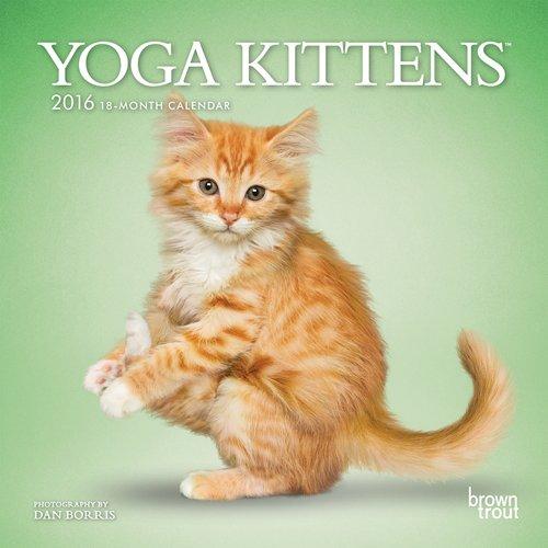9781465039484: Yoga Kittens 2016 Mini 7x7 (Multilingual Edition)