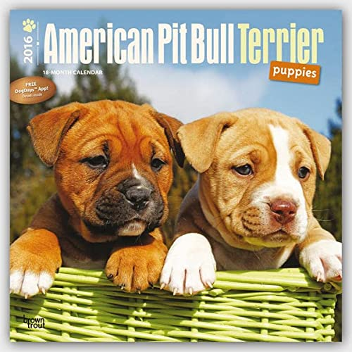 9781465040145: American Pit Bull Terrier Puppies 2016 Square 12x12 (Multilingual Edition)