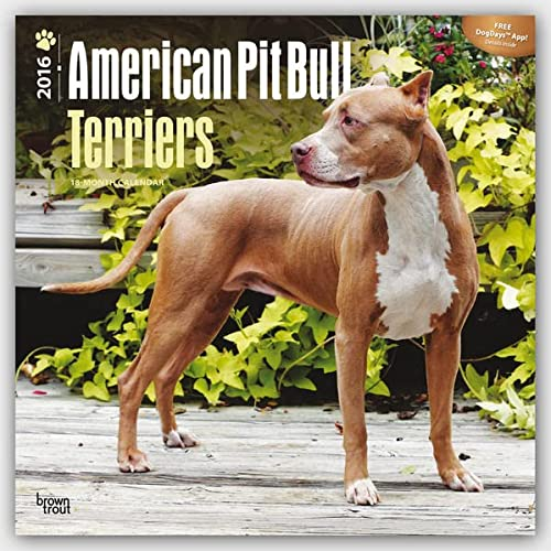 9781465040152: American Pit Bull Terriers 2016 Square 12x12 (Multilingual Edition)
