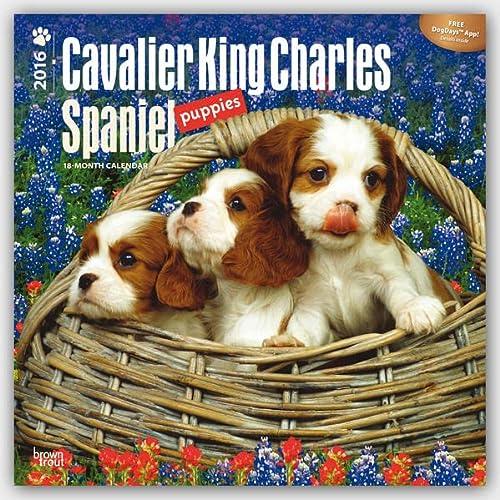 9781465040572: Cavalier King Charles Spaniel Puppies 2016 Calendar