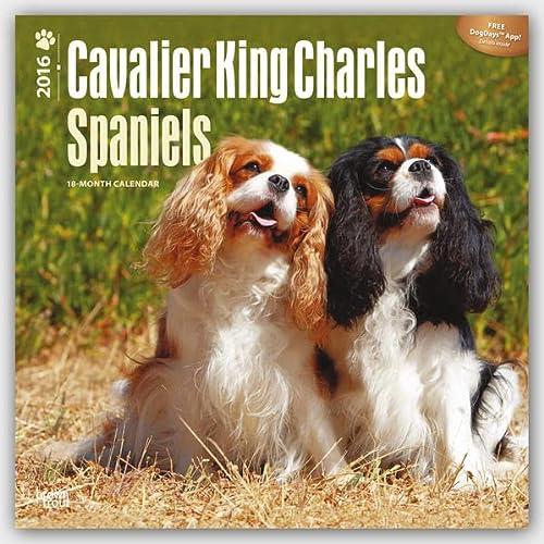 9781465040589: Cavalier King Charles Spaniels - 2016 Calendar 12 x 12in