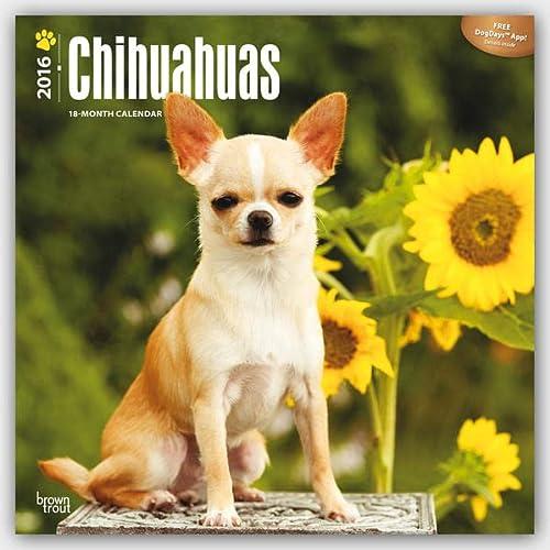 9781465040657: Chihuahuas 2016 - 18-Monatskalender mit freier DogDays-App: Original BrownTrout-Kalender