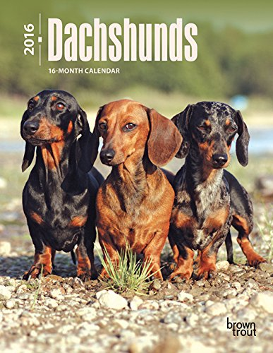 9781465040749: Dachshunds 2016 Engagement