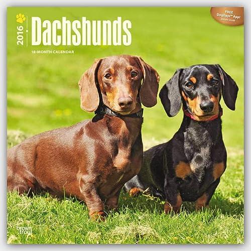 9781465040763: Dachshunds 2016 Calendar