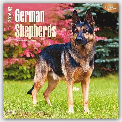 9781465040947: German Shepherds - 2016 18 Month Calendar 12 x 12in