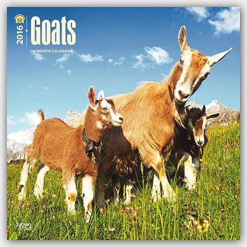9781465040985: Goats 2016 Calendar