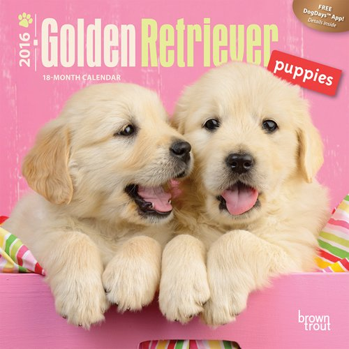 Golden Retriever Puppies - 2016 Mini Wall: Browntrout Publishers