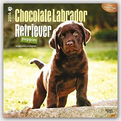 9781465041432: Chocolate Labrador Retriever Puppies 2016 - Braune Labradorwelpen - 18-Monatskalender mit freier DogDays-App: Original BrownTrout-Kalender