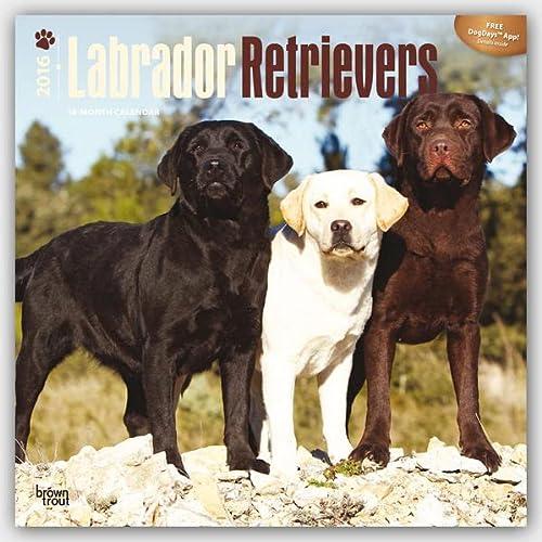 9781465041470: Labrador Retrievers 2016 - 18-Monatskalender mit freier DogDays-App: Original BrownTrout-Kalender