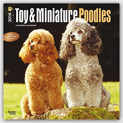 9781465041845: Poodles Toy & Miniature 2016 Wall