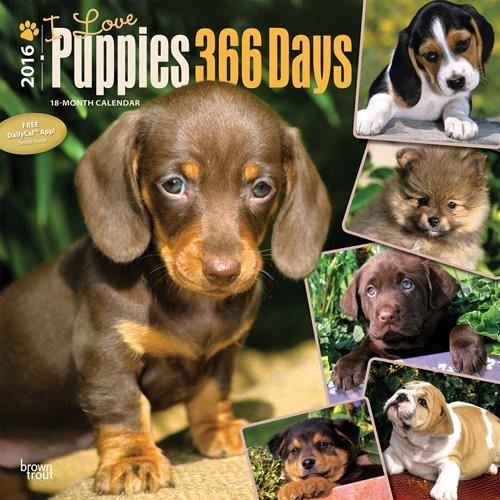 9781465041937: Puppies, I Love, 366 Days, 2016 Square 12X12