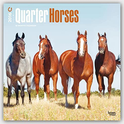 9781465041944: Quarter Horses 2016 Square 12x12 (Multilingual Edition)
