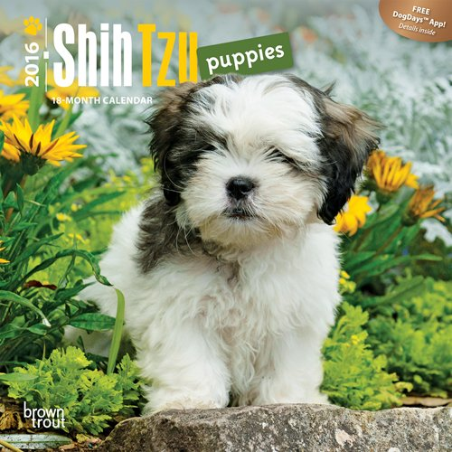 9781465042163: Shih Tzu Puppies 2016 Mini Wall