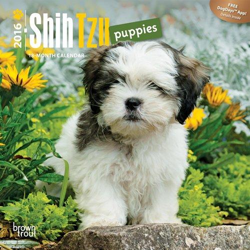 9781465042163: Shih Tzu Puppies 2016 Calendar
