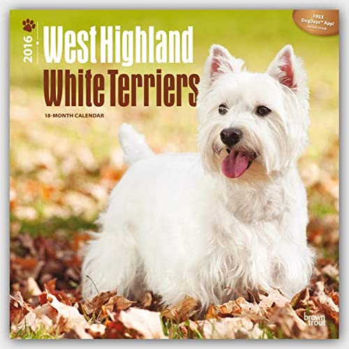 West Highland White Terriers 2016 Square 12x12 (Multilingual Edition): Browntrout Publishers
