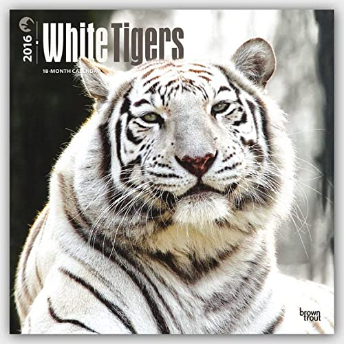9781465042415: White Tigers 2016 Square 12x12 (Multilingual Edition)