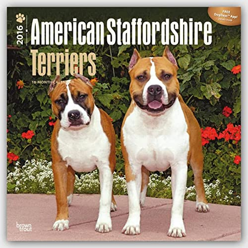 9781465042637: American Staffordshire Terriers 2016 Calendar