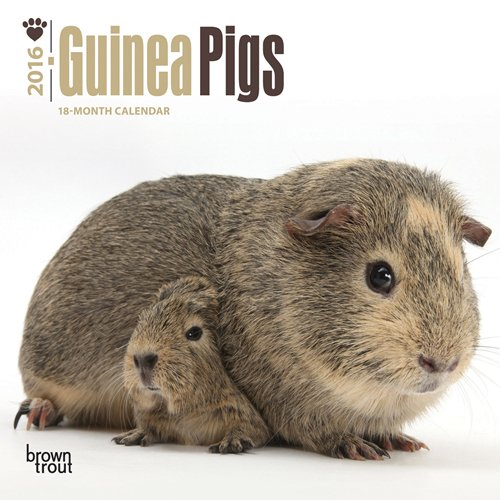 9781465043931: Guinea Pigs 2016 Mini Wall