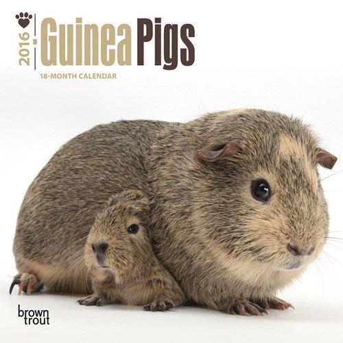 9781465043931: Guinea Pigs 2016 Mini 7x7 (Multilingual Edition)