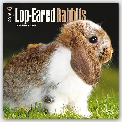 9781465044549: Lop-Eared Rabbits - 2016 Calendar 12 x 12in