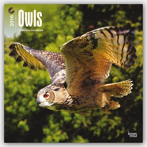 9781465045423: Owls 2016 Square 12x12 (Multilingual Edition)