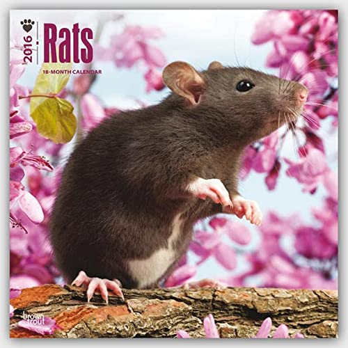 9781465045713: Rats 2016 Square 12x12 (Multilingual Edition)